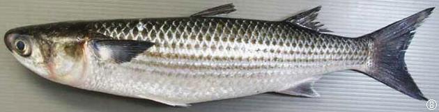 动物 鱼 鱼类 630